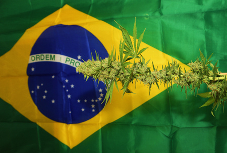 tundra: Matanuska Tundra variety of aged medical marihuana with Brasil flag