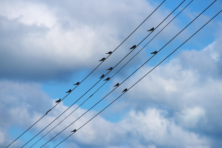 birds on a wire: Swallow birds sitting on wire in summer evening Stock Photo