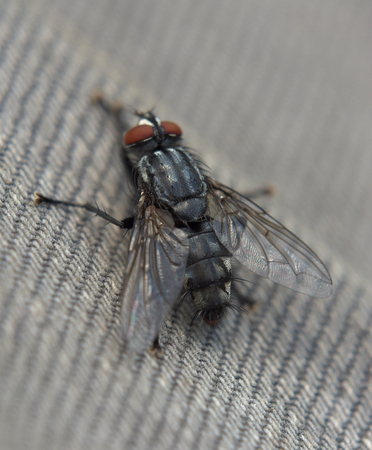 Detail of fly in sunny summer day Stock Photo