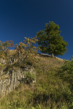 Rowan berry trees and rock near Velky Spicak hill Stock Photo
