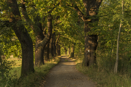budweis: Autumn time in alley near ponds in south of Bohemia Stock Photo