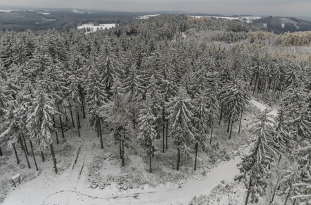 snow forest: Snow forest from Krudum observation tower in winter time