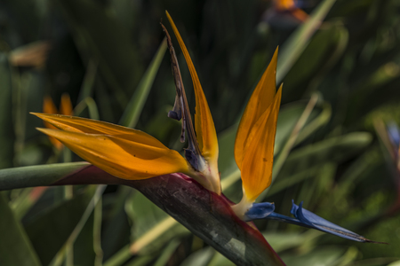 lat: Vietnam Da Lat flowers near cable car Stock Photo