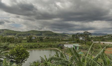 lat: Coffee bushes near coffee farm near Da Lat city in Vietnam Stock Photo