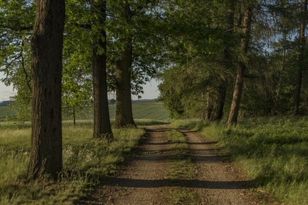 moravia: Sunny path near Dacice and Trebetice towns in spring evening
