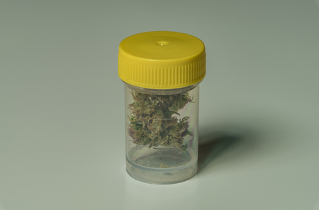 seeds of various: Medical marijuana in transparent and yellow plastic box