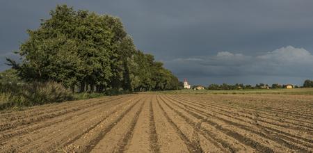 terezin: Campo marrone di patate vicino al villaggio di Pocaply in estate sera soleggiata