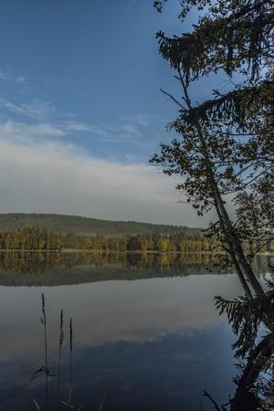wildlife preserve: Blue morning near Kladska pond in autumn time with fog