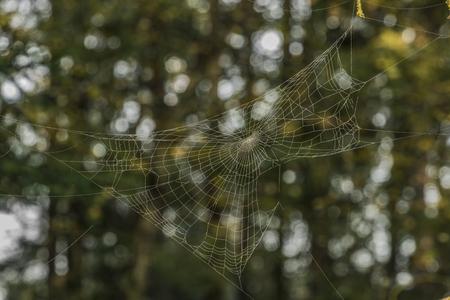 Silver and golden cobweb near Kladska pond in autumn sunny morning