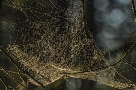 Zilveren en gouden spinneweb dichtbij Kladska-vijver in de herfst zonnige ochtend Stockfoto