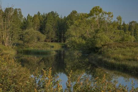 Tepla Vltava river in summer morning in national park Sumava Archivio Fotografico