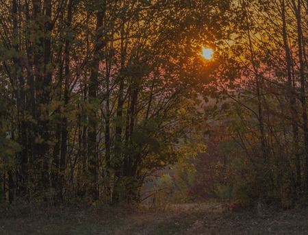 Color dark red orange sunset in Krkonose national park in autumn evening between trees