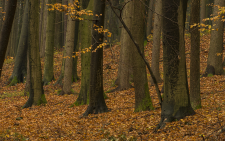 Dark color autumn forest with leaf trees near Luhacovice spa town