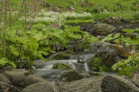 Spring small river Olesnice near Zlate Hory town with color stone Reklamní fotografie