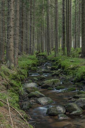 Bystrina small creek in summer nice morning in Krusne mountains near Sokolov town