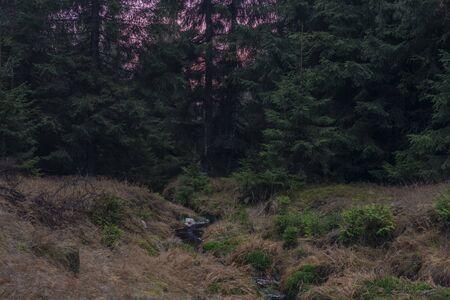 Upper watercourse of creek near Bilina river in Krusne hory mountains in winter dark evening
