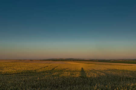 In middle of dry field in sunset color evening near Melcany village in south Moravia Reklamní fotografie