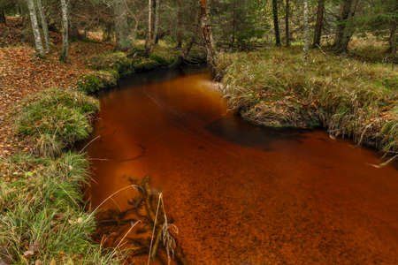 Jezerni creek in autumn color morning with red water and dry fall leafs on ground in national park Sumava Reklamní fotografie