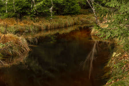 Jezerni creek in autumn color morning with red water and dry grass on meadow in national park Sumava Reklamní fotografie