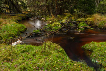 Jezerni creek in autumn color morning with red water and green beautiful forest in national park Sumava