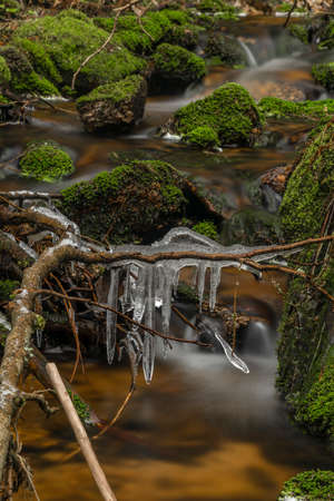 Dry grass and frosty icicle near Hajny creek in Sumava national park in spring cold morning