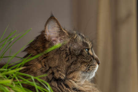Tabby cat with green eyes on handmade indoor tree with green cat grass