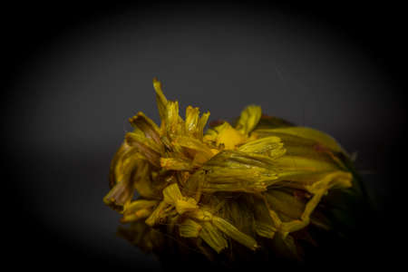Color indoor view on blue and yellow flowers with color dark background