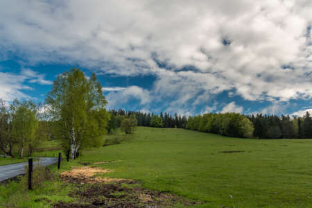 Pasture land in spring fresh morning after night rain with white clouds