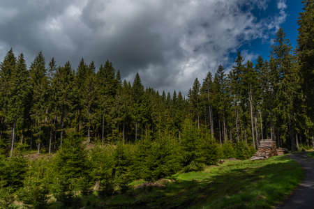 Forests and trees near Prebuz village in Krusne mountains in spring color day Reklamní fotografie