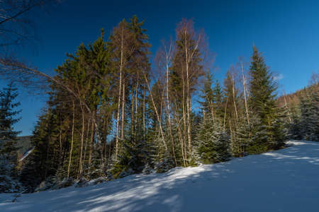 Cold spring with snow in national park Krkonose with blue sky and color trees