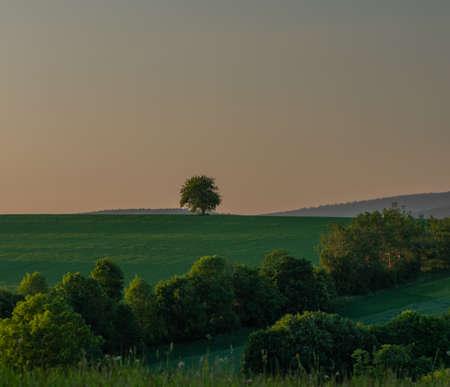 Landscape near Roprachtice village in spring summer green evening