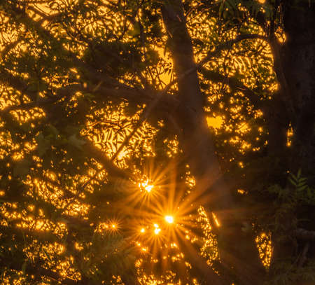 Sunset with tree silhouette and star sun ray and orange mist