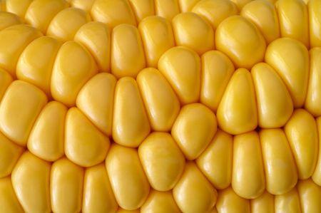 Corn cob closeup Stock Photo - 923446