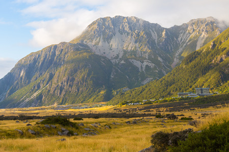 Meadow and Spaniard on Mt Cook National Park, New Zealand Stock Photo