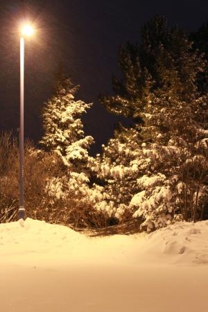 windy snowy night at the park Stok Fotoğraf