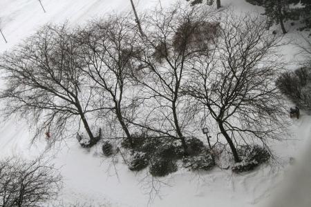 heavy snowfall in the city  Stok Fotoğraf