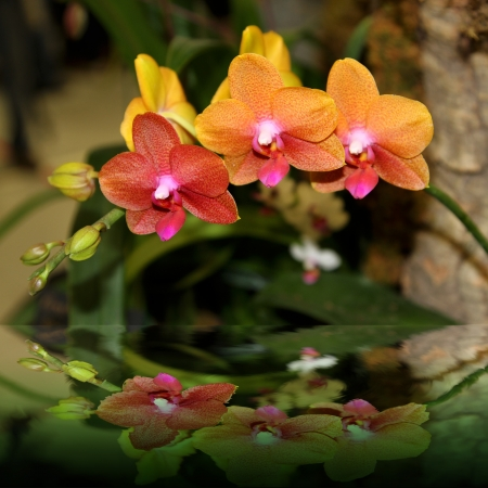 Elegant yellow-orange colored orchids with light pink, yellow and fuschia colors in the middle photo