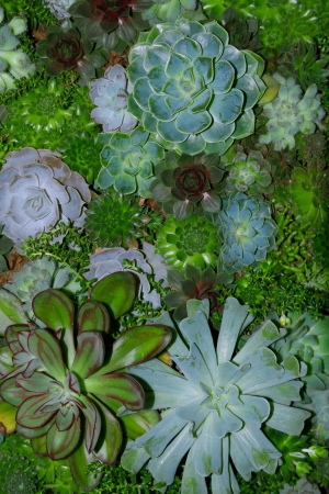 Variety of succulent plants in various shades of green
