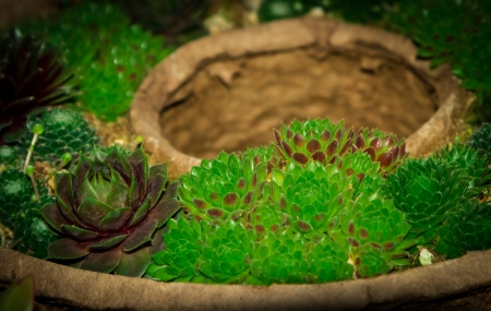Variety of succulent plants in various shades of green on a plant dish Stok Fotoğraf
