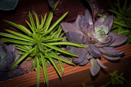 Succulent plants planted in a wooden plant box Stok Fotoğraf