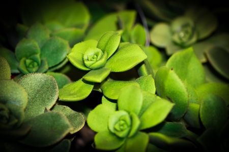 Close up of a succulent plant with leaves that look like a flower