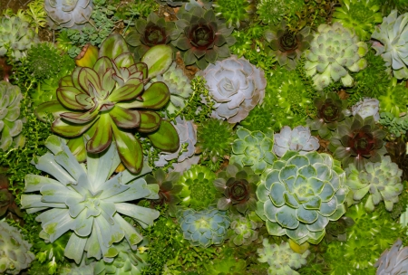 A variety of succulent plants in various shades of green