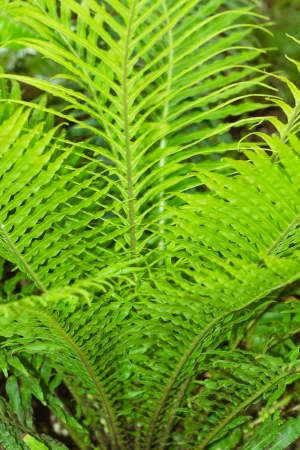 habitats: Ferns are vascular plants which live in a wide variety of habitats; from remote mountain elevations   to dry desert rock faces, bodies of water and open fields