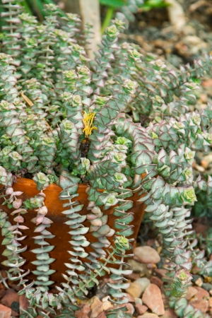 Succulent plants in an orange clay pot Stok Fotoğraf