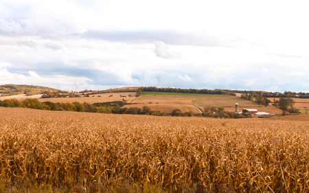 def: Brown dry cornfield at the end of season