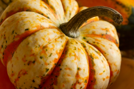 Gourds in a basket from Fall harvest