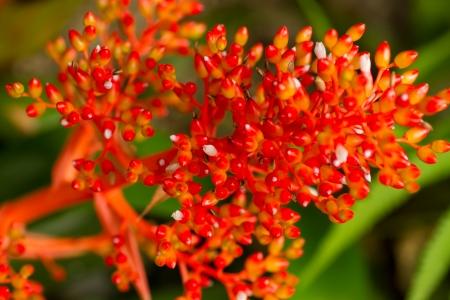 Closeup of a bright orange flower buds