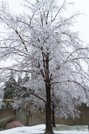 Icicles coated twigs and branches of a tree after an ice storm Stock Photo