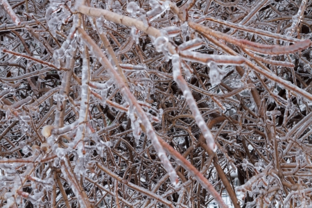 Icicles coated twigs and branches after an ice storm Stock Photo