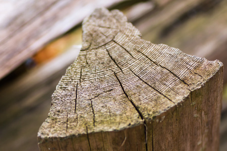 Piece of chopped wood with growth rings on the surface Stok Fotoğraf